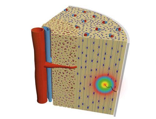 Flexoelectricity triggers the bone-repair process